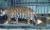 Ягуар-людоед сбежал из зоопарка в Таганроге и попытался съесть женщину