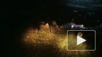 Новости Украины: расстрел мирных жителей Донбасса попал в объектив видеорегистратора