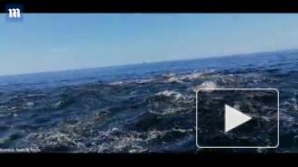 Мужчина вывалился из лодки при столкновении с китом