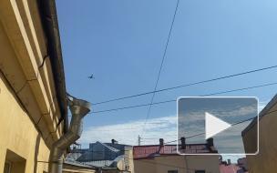 Репетиция воздушной части парада Победы в Петербурге