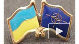 Новости Украины: пока Порошенко хочет мира, истинные патриоты хотят в НАТО