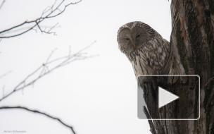 Орнитолог Сергей Петров — о совах, аистах и утках в Петербурге