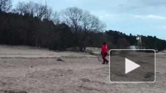 """На пляже """"Ласковый"""" спасли еще одного обессиленного тюлененка"""