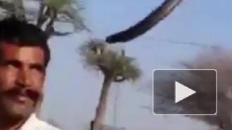Смертельное видео из Индии: во время фото туриста укусила кобра