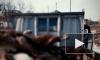 Жуткое видео из Благовещенска: Задержан владелец приюта для собак после гибели 47 питомцев