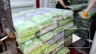 На Балтийской таможне задержали 16 тонн ткани с котятами