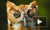 Петербургские птицы заболели депрессией