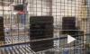 На шинном заводе в Ленобласти презентовали новый склад и роботов