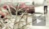 В Новый год на Петербург обрушится мокрый снег с дождем