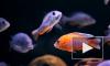 У африканских рыб появилась способность продлевать себе жизнь