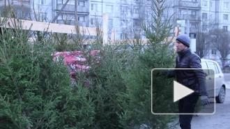 Дыхание Петербурга: события предновогодней недели