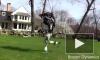 Робот от BostonDynamics совершает утренние пробежки на свежем воздухе